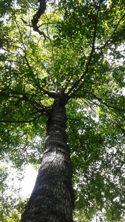TreemarkingPedro6
